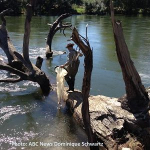 More fish in the lower Murray? Bring Back the Running River