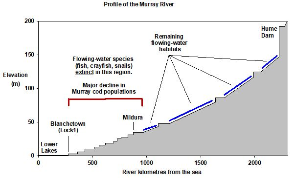 graph more fish in the lower murray? bring back the running river ozfish