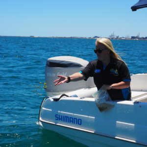 Restoration project building habitat for Pink Snapper in WA