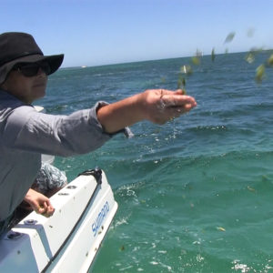 Snapper Habitat Gets Second Dose Of Seagrass Seeds